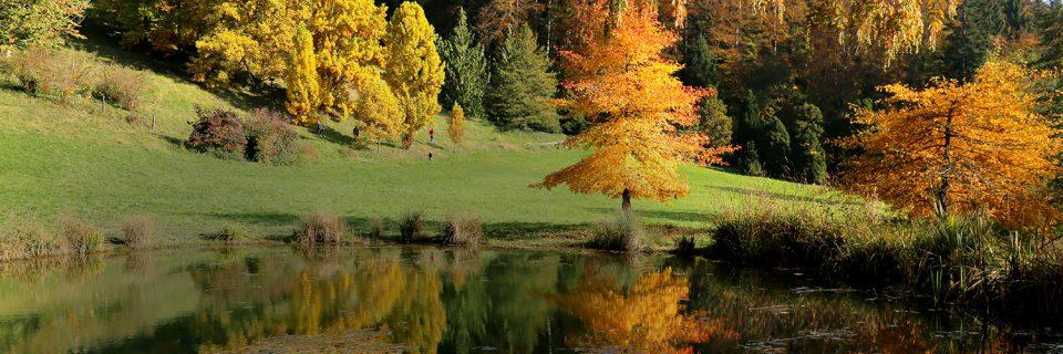 L'Arboretum paré des couleurs chatoyantes de l'Automne !