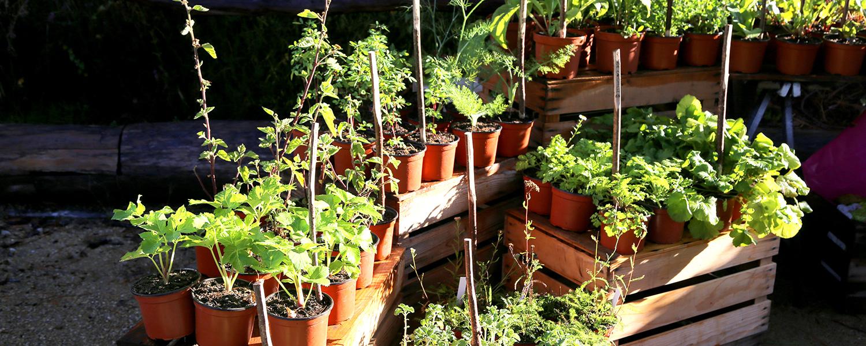 Plante A Planter En Septembre marché aux plantes - l'arboretum du vallon de l'aubonne