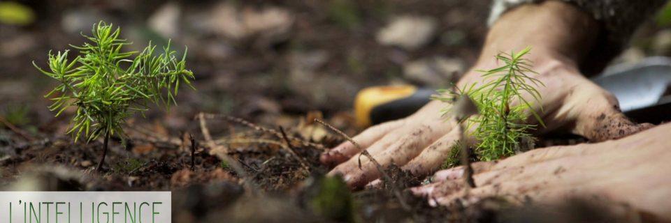 """Diffusion du documentaire """"L'Intelligence des arbres"""" au Cinéma Rex d'Aubonne"""
