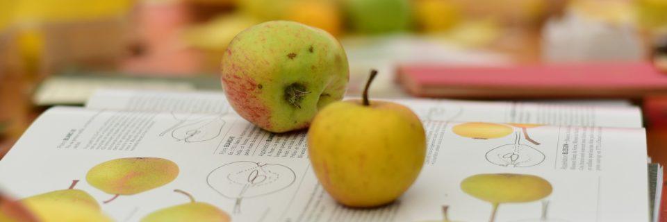 """""""Verger : des pommes et des poires"""""""