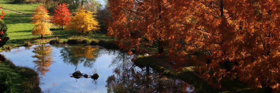 Les couleurs d'automne à l'Arboretum
