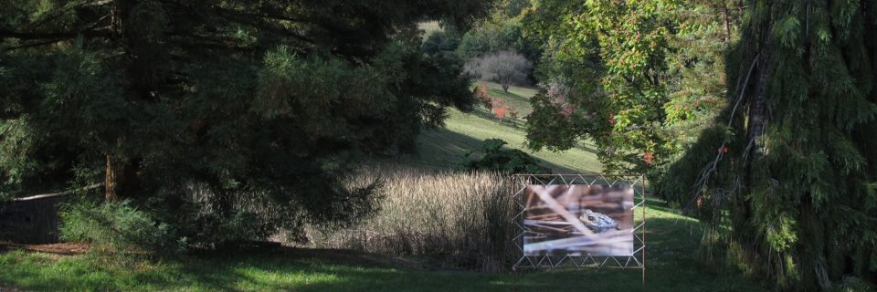 """""""Un Arboretum plein de vie"""""""
