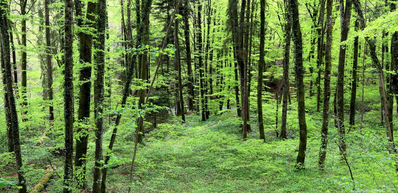 Un parc botanique unique en Suisse!<br /> <br />
